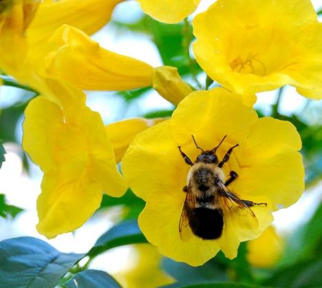 Bunga dan Kumbang saling membutuhkan